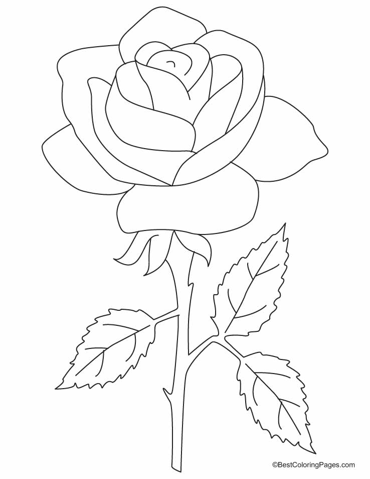 738x954 Rose Coloring Page