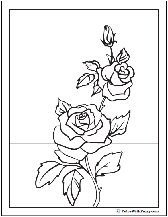 590x762 Rose Coloring Page Rose Buds On Stem