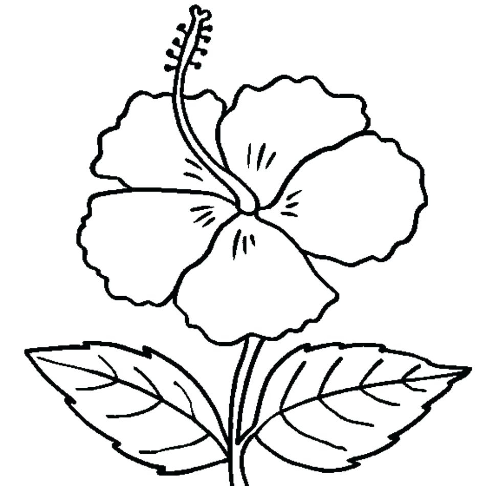 950x950 Best Of Begonia Coloring Pages Gallery Printable Coloring Sheet
