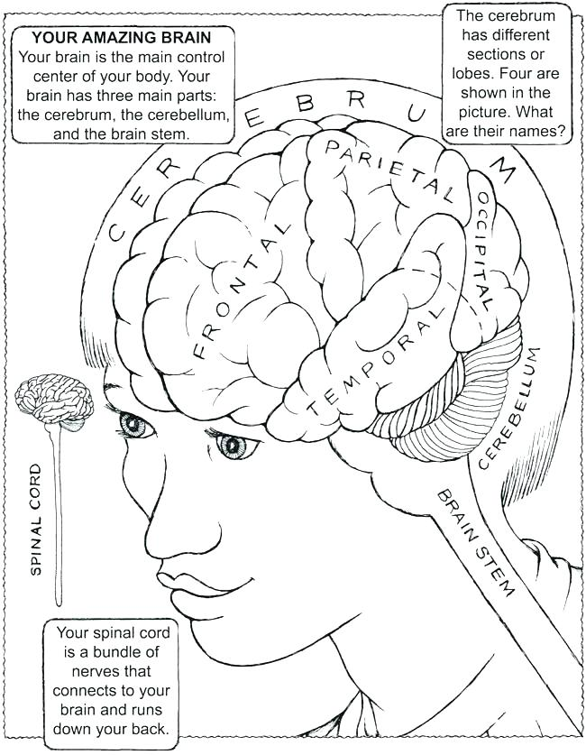 650x837 Brain Coloring Page Brain Coloring Sheet Brain Coloring Book Also
