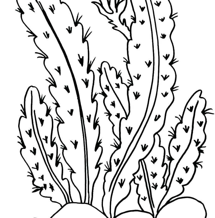 850x864 Desert Animal Coloring Pages Plants Coloring Page Desert Animal