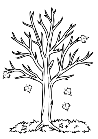 339x480 Fall Tree Coloring Pages