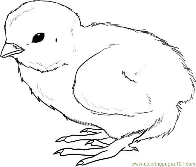 656x559 How To Draw A Chick Step Coloring Page