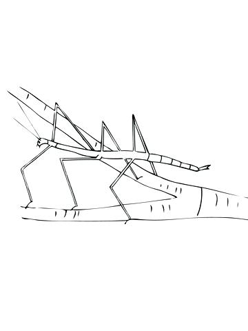 360x480 Insect Coloring Page Walking Stick Insect Coloring Page Insect