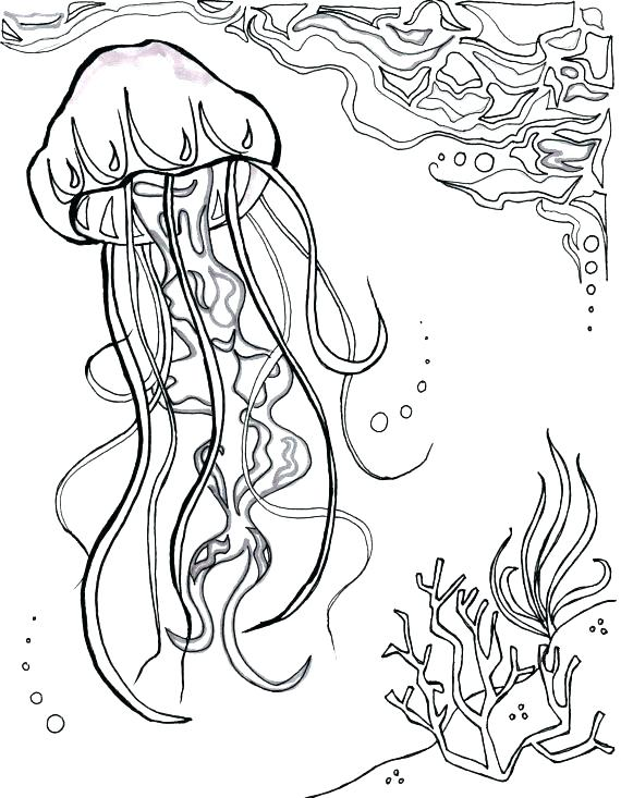 570x733 Stingray Coloring Page Fresh Jellyfish Coloring Page Print Jelly