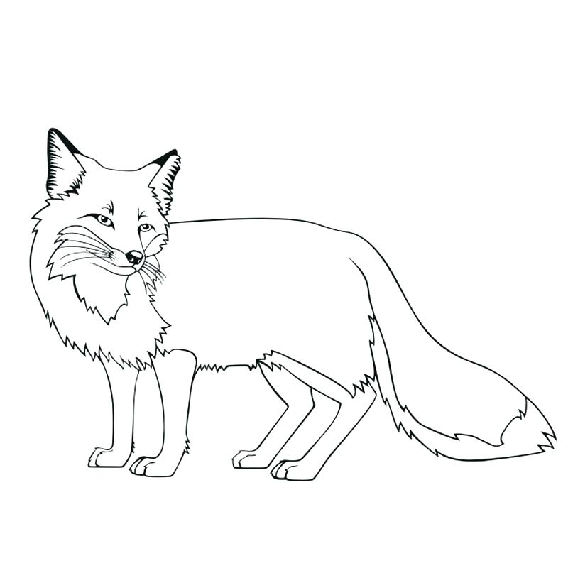 800x821 Fox And The Hound Coloring Pages Fox Coloring Pages Stone Fox