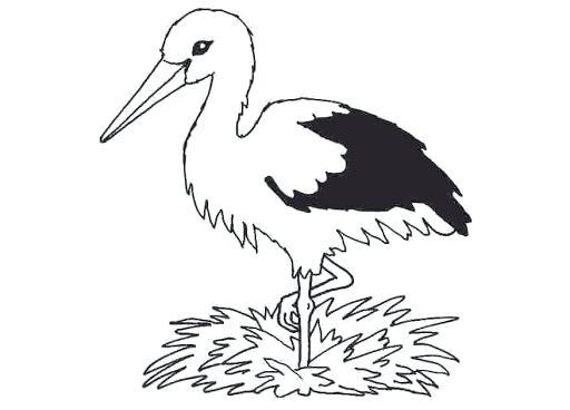 512x368 Stork Coloring Pages Stork Coloring Pages Print