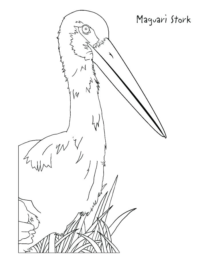 720x932 Stork Coloring Pages This Coloring Page For Kids Features A Stork