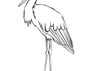 320x240 Stork Coloring Pages Stork Coloring Animals Coloring Birds My