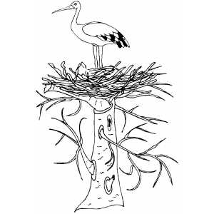 300x300 Stork In Nest Coloring Page