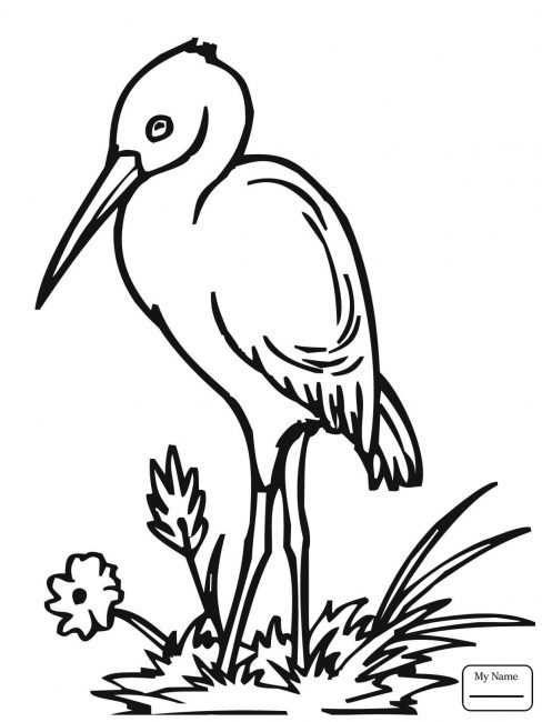 488x650 Stork Coloring Pages Nice Coloring Pages For Kids