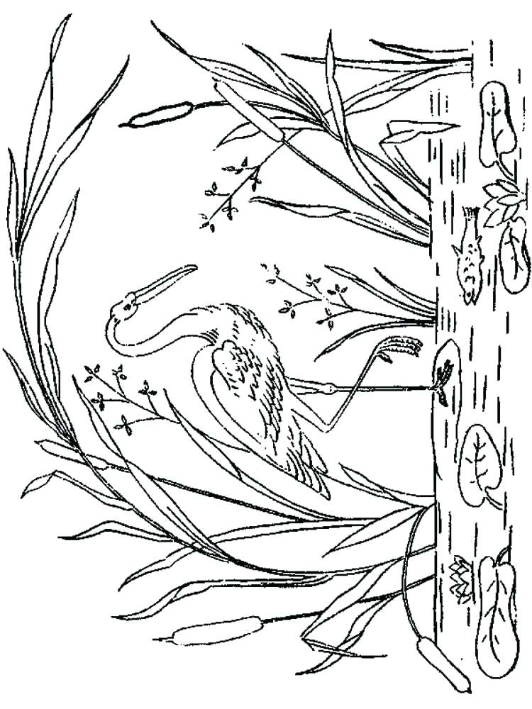 750x1000 Storks Coloring Pages Stork Coloring Page Stork Coloring Pages