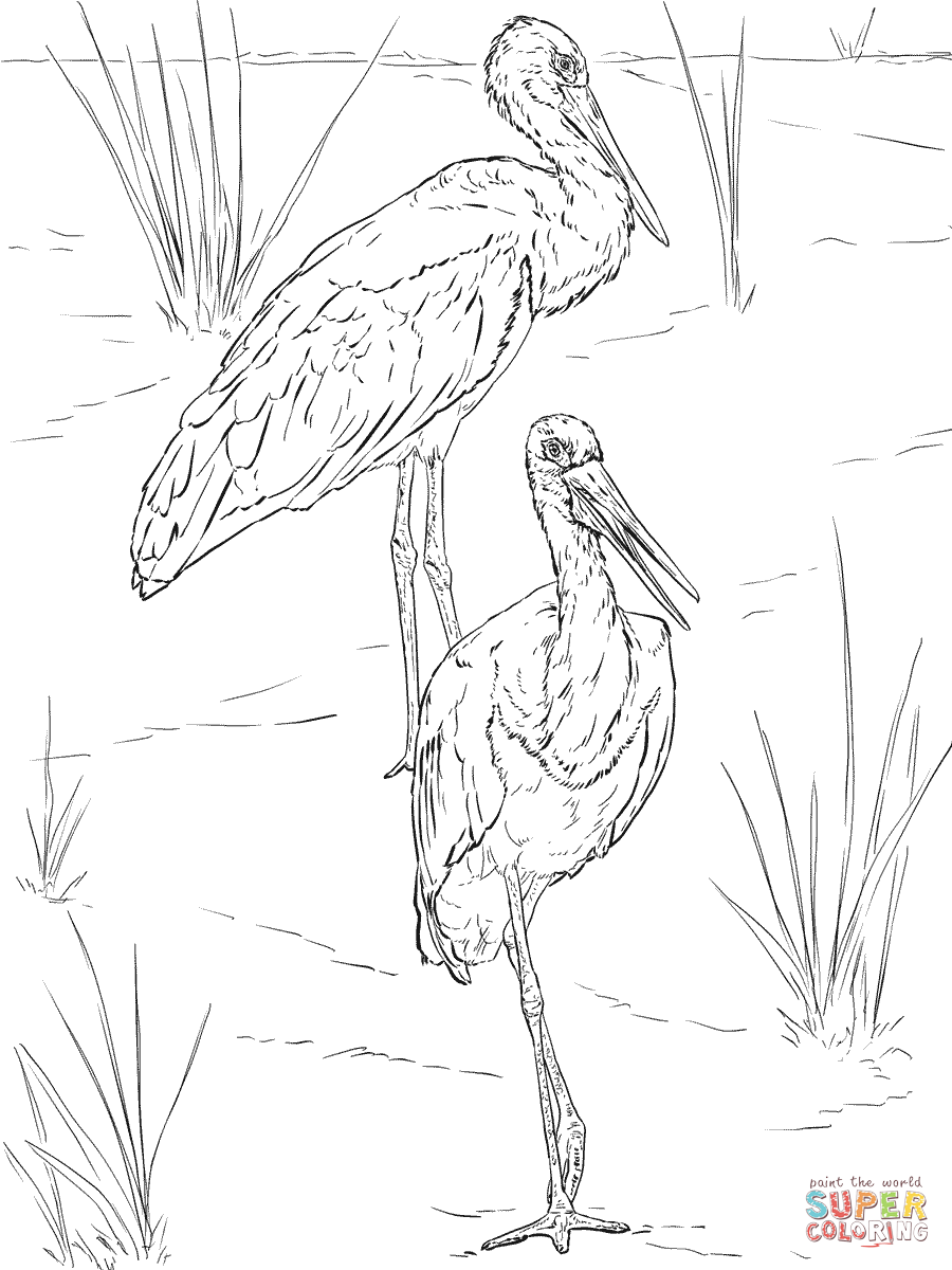 900x1200 Storks Coloring Pages