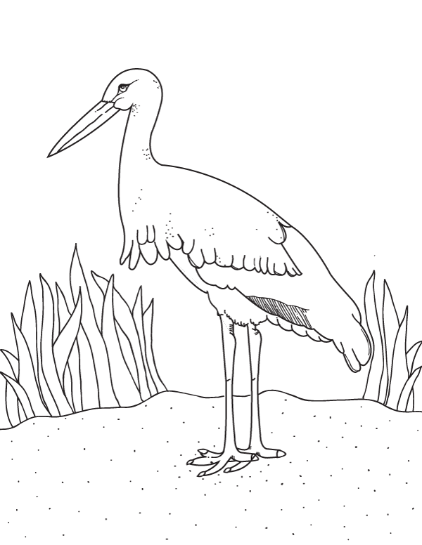 600x776 Free Printable Stork Coloring Page Download It From Https