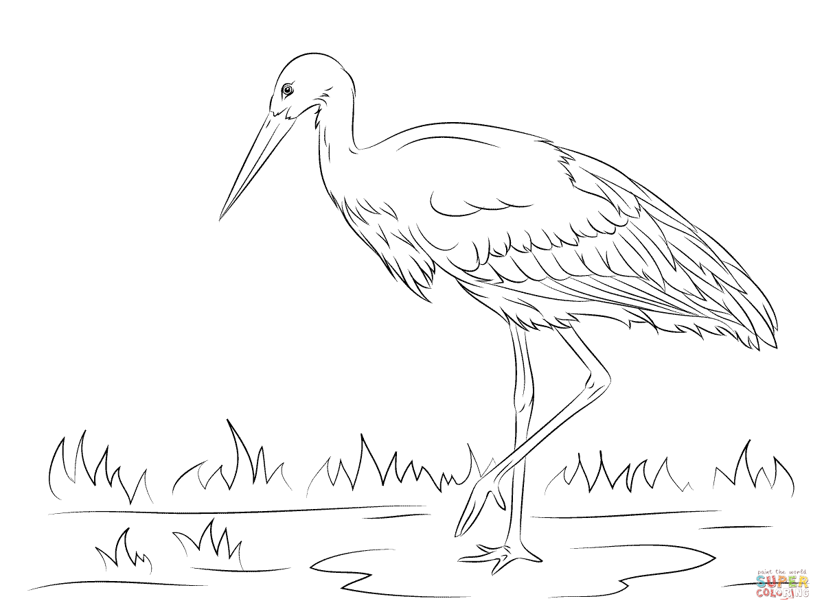 1200x895 Focus Storks Coloring Pages White Stork Page F