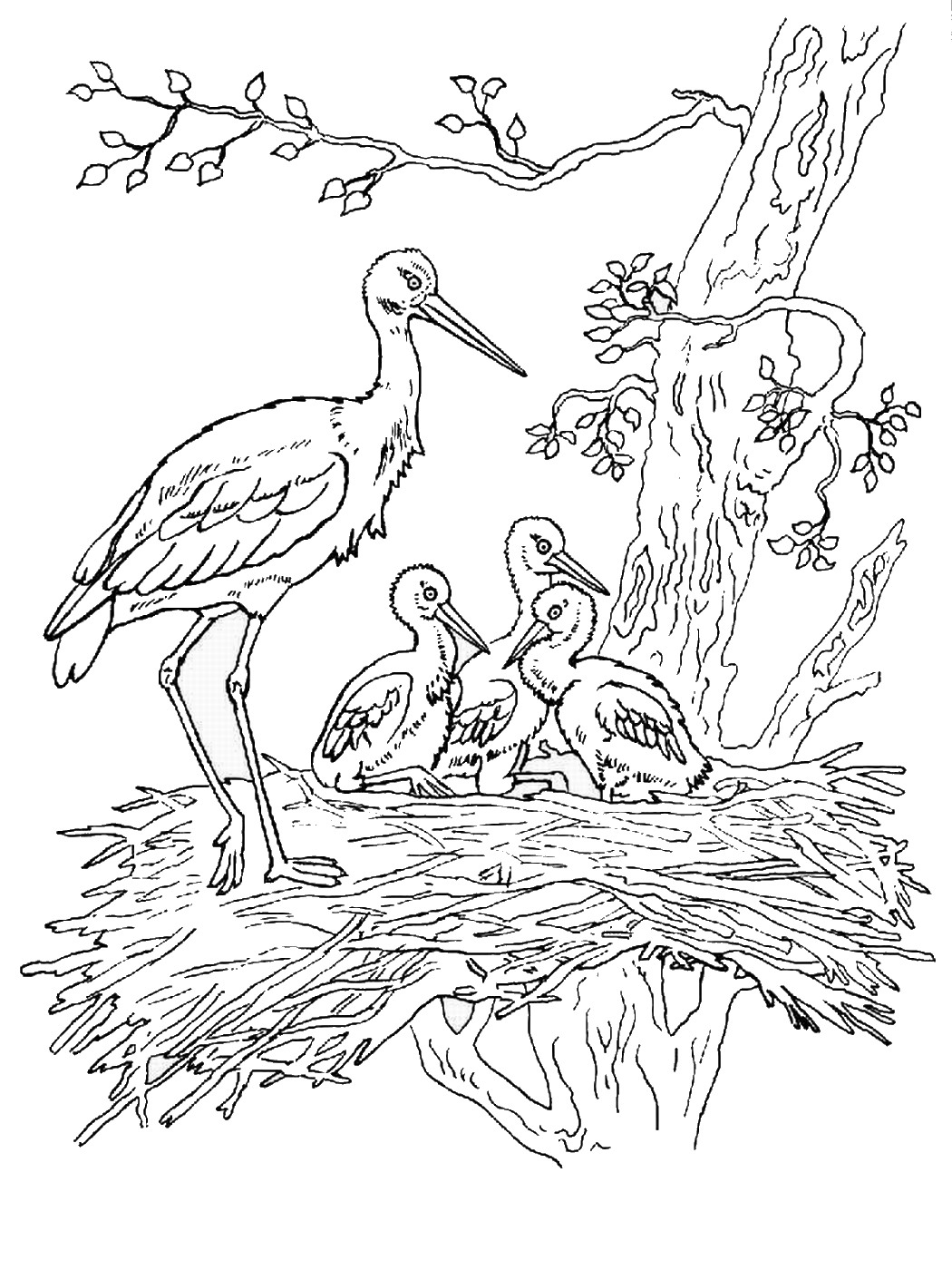 1050x1400 Storks Coloring Pages