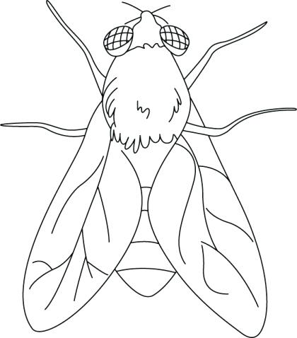 420x478 Fly Coloring Page House Fly Coloring Pages Download Free House Fly