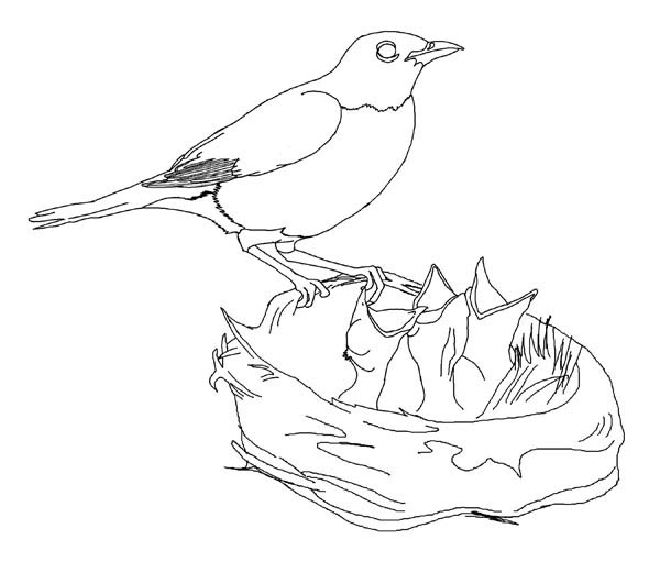 600x521 Hungry Robin Babies Coloring Page