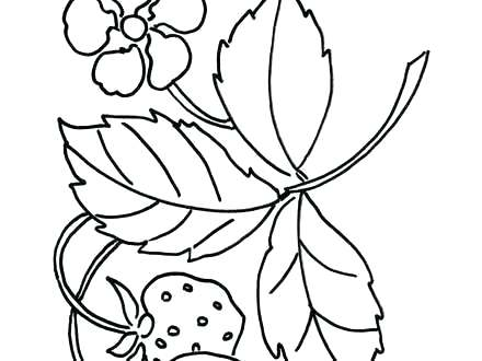 440x330 Strawberry Coloring Sheet Remarkable Ideas Strawberry Coloring