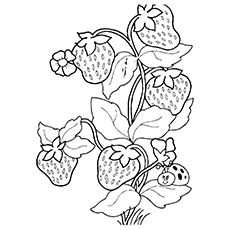 230x230 Strawberry Plant Coloring Pages