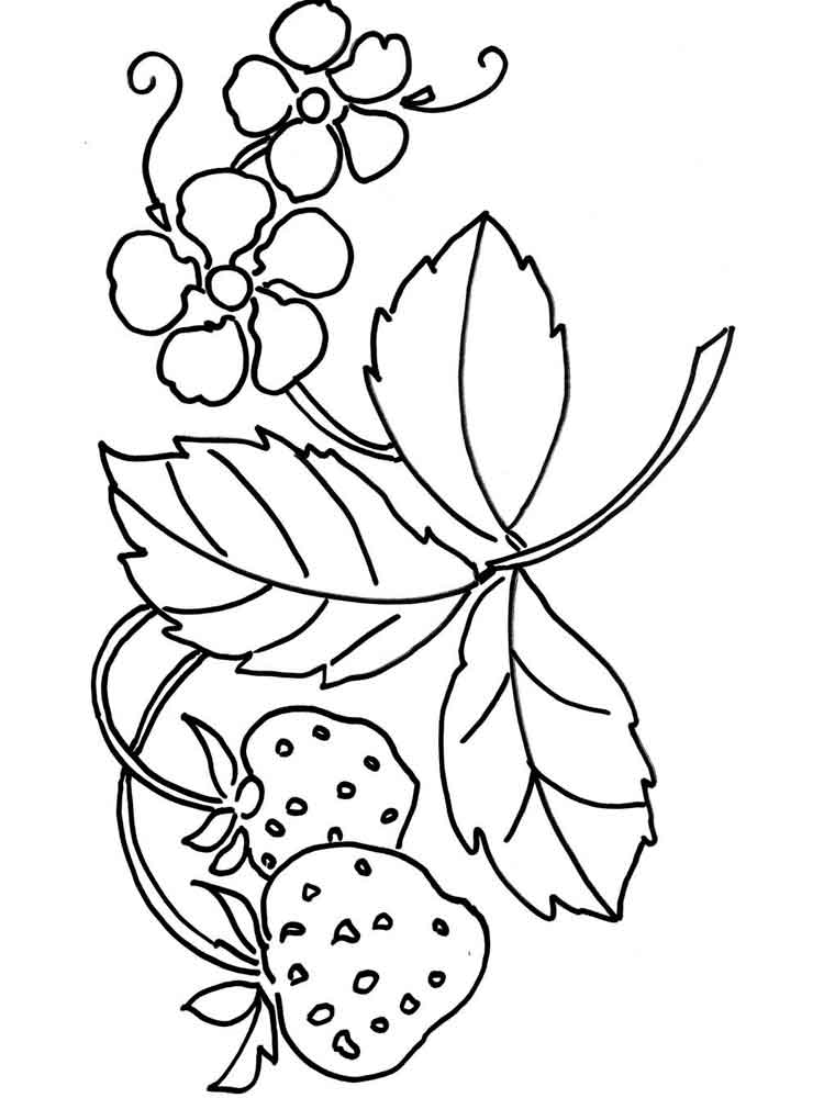 750x1000 Strawberry Berries Coloring Pages