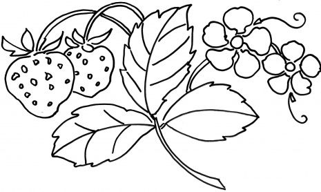 465x278 Strawberry Plant Coloring Page That Would Be Great For Embroidery