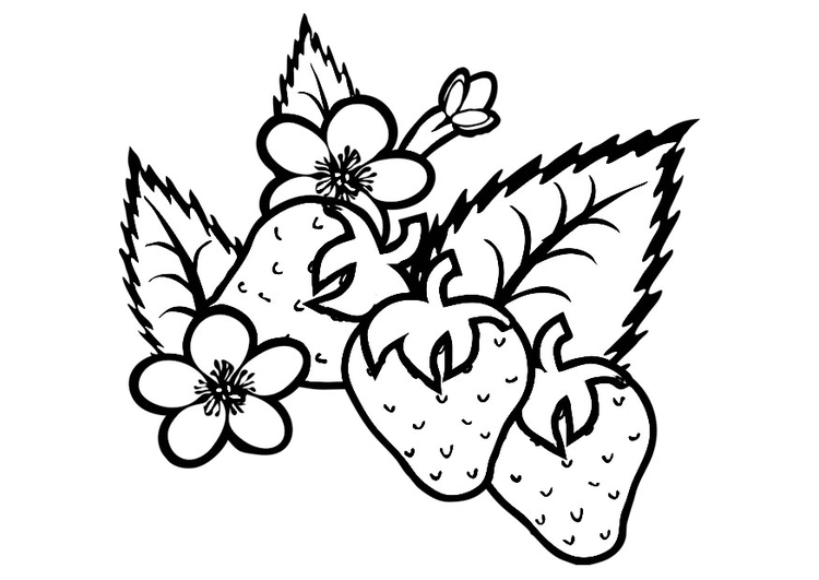 750x531 Coloring Page Strawberries