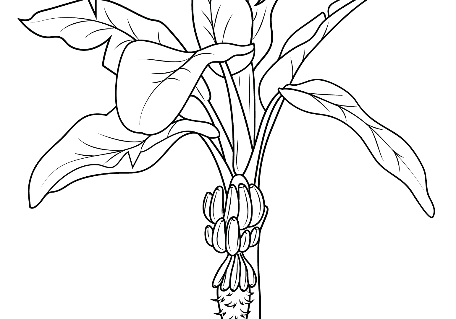 1542x1080 Fancy Ideas Strawberry Coloring Pages Full Free For Kids Fruits