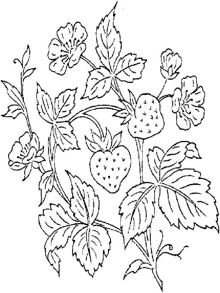 750x1000 Free Printable Strawberry Coloring Pages For Kids