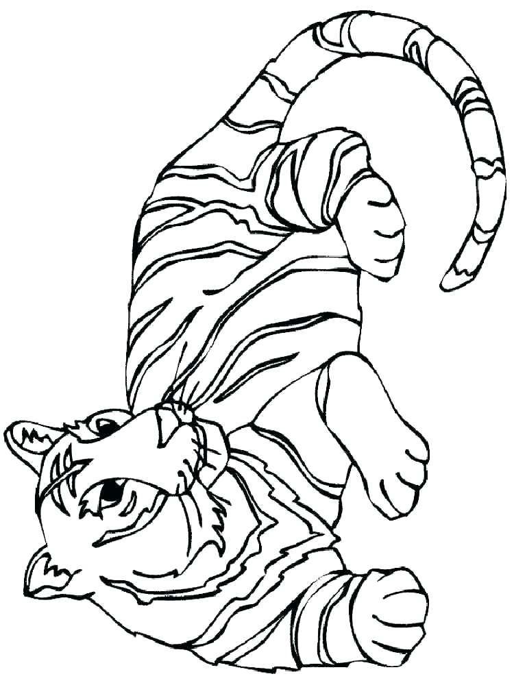 750x1000 Tiger Stripe Coloring Pages Without Stripes Page Tigers Animals