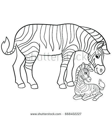 450x470 Zebra Coloring Pages Stallion Zebra Coloring Page Baby Zebra