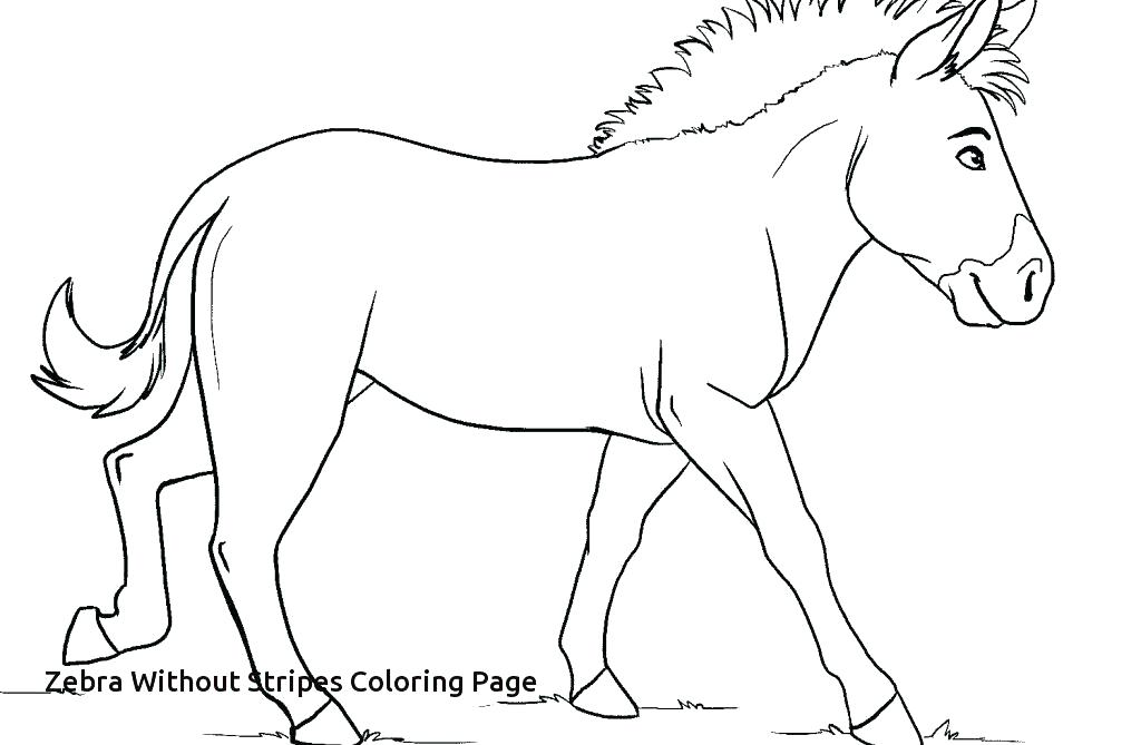 1024x669 Zebra Coloring Pages Zebra Color Page Zebra Coloring Pages