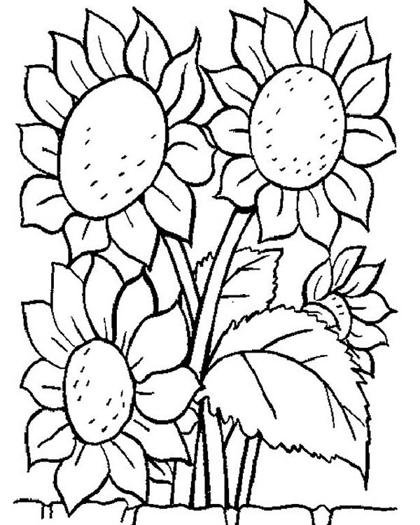 600x750 Awesome Sun Flower Coloring Page