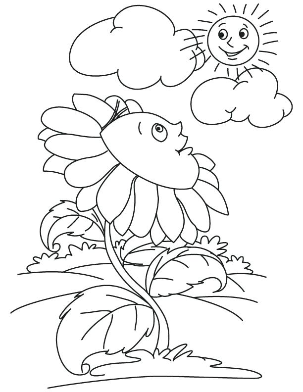 612x792 Sun Coloring Pages Sunflower Wallpaper Looking At Sun Coloring