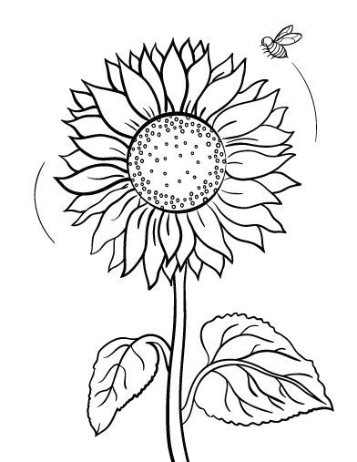 392x507 Printable Sunflower Coloring Page Free Pdf Download