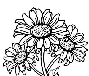 300x257 Realistic Sunflower Coloring Page Free Download
