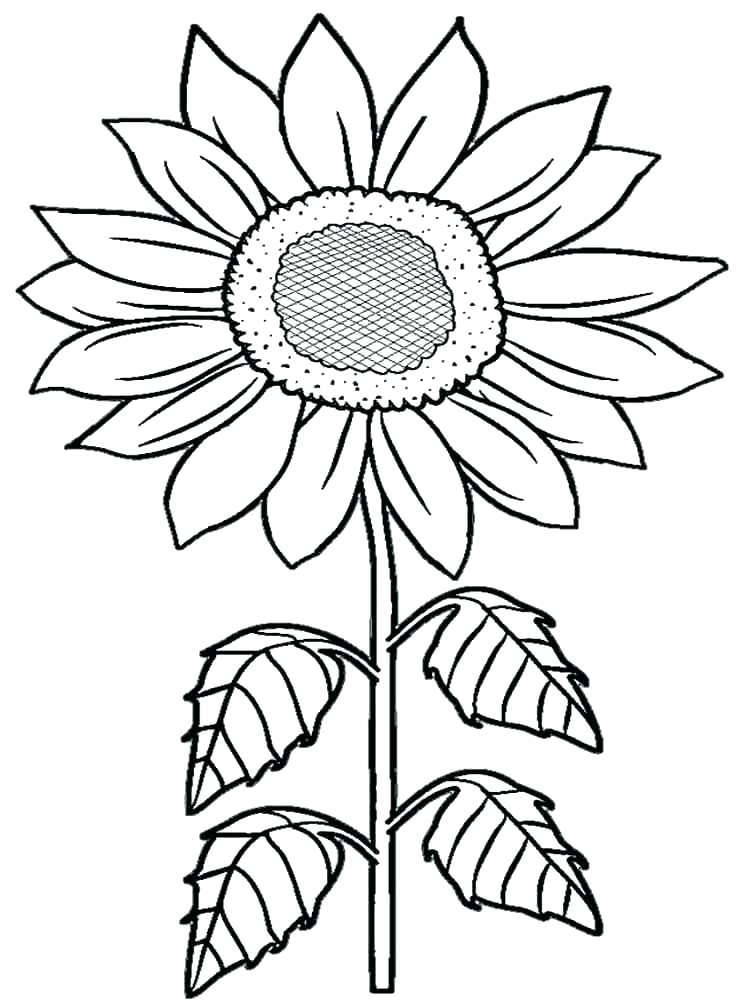 750x1000 Sunflowers Coloring Pages Van Coloring Pages Also Sunflower
