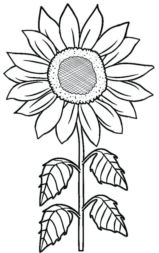 534x850 Van Gogh Sunflowers Coloring Page Van Coloring Pages Van Gogh