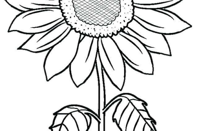 643x425 Sunflower Coloring Pages