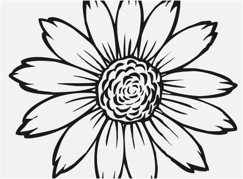 827x609 Sunflower Coloring Page Design Sunflower Flower Coloring Pages