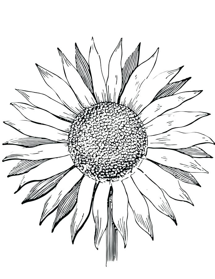 695x900 Sunflower Coloring Pages Printable Van Sunflower Colouring Pages