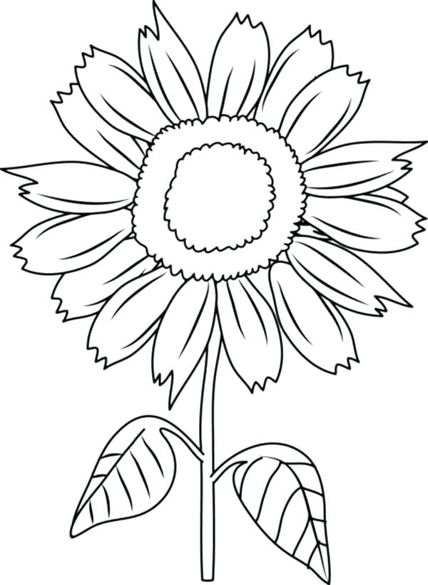 Sunflower Coloring Pages For Adults At Getdrawings Com Free For