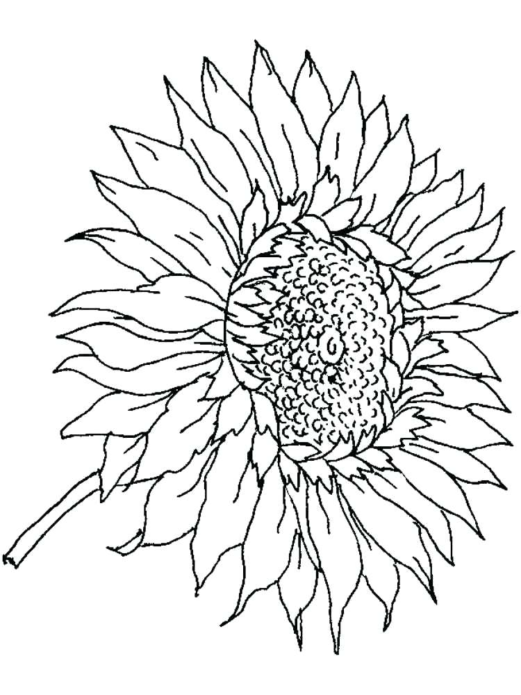 750x1000 Sunflower Coloring Pages Sunflower Coloring Page For Adults