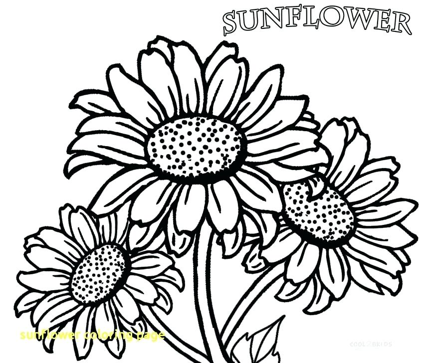 850x728 Sunflower Coloring Pages Sunflower Coloring Page With Printable