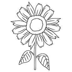 Sunflower Coloring Pages For Kids