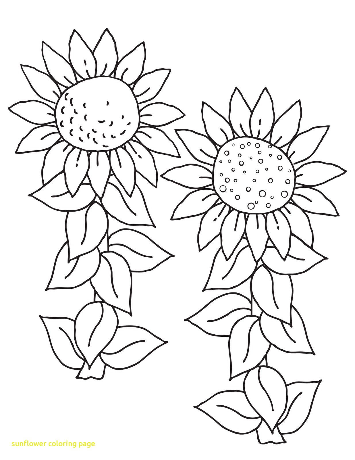 1236x1600 Sunflower Coloring Page With Free Printable Sunflower Coloring