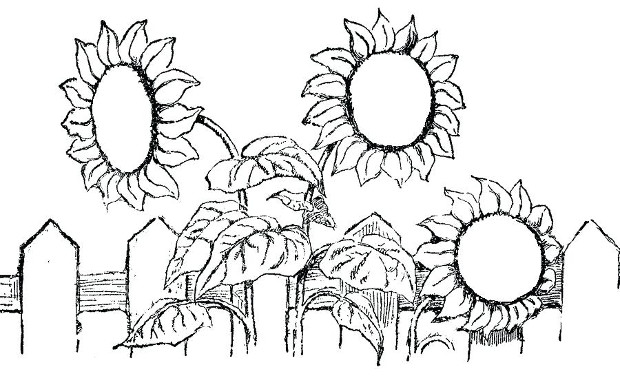 900x546 Van Gogh Sunflowers Coloring Pages Kids Coloring Sunflower