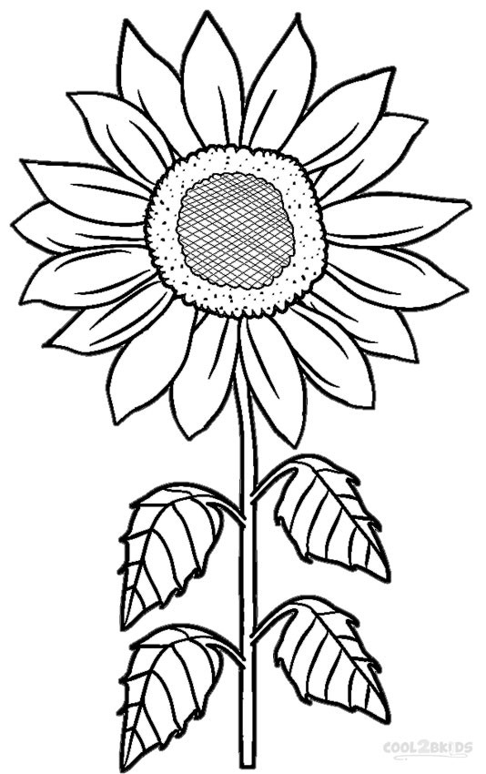 534x850 Coloring Pages Sunflower Wagashiya