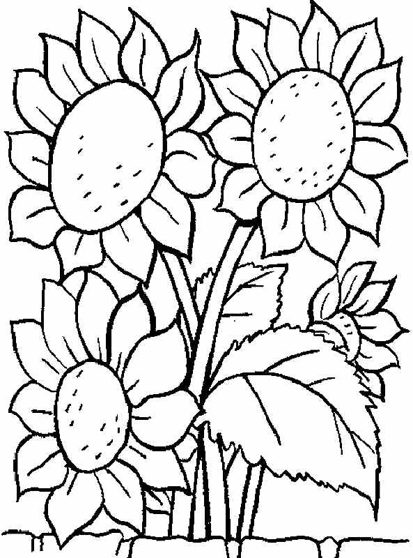 593x800 Free Printable Coloring Pages Sunflower Flowers For Kids