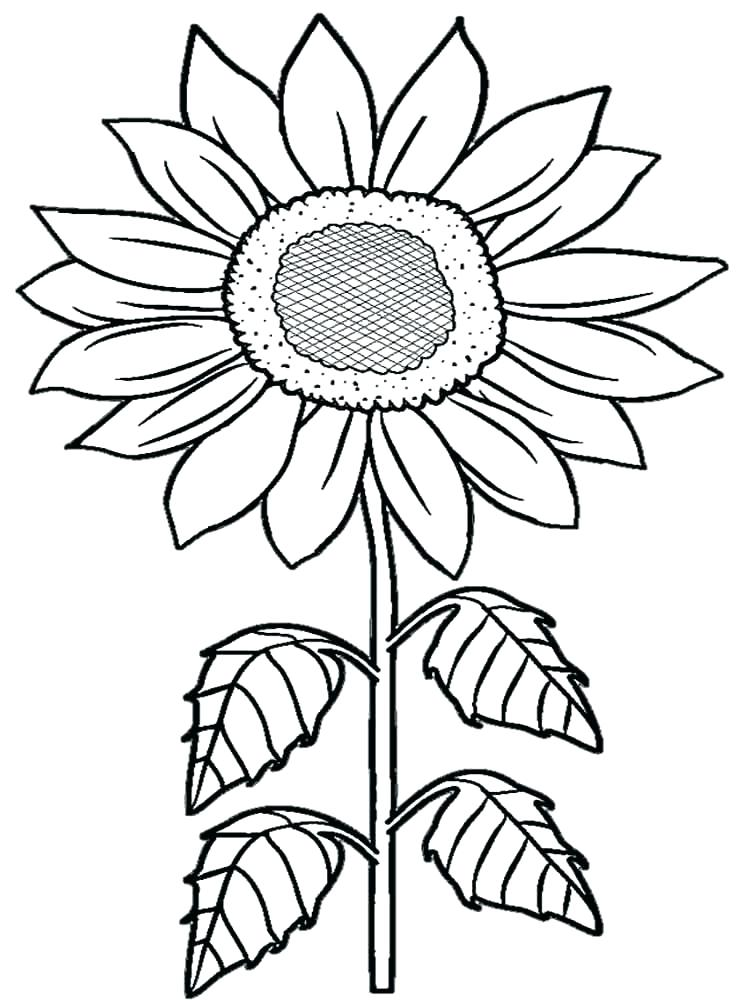 750x1000 Printable Sunflower Coloring Pages For Kids Sunflower Coloring